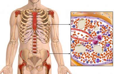 location of active bone marrow
