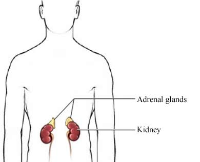 Adrenalectomy Uva Health System