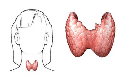 Thyroid Cancer Uva Health Charlottesville