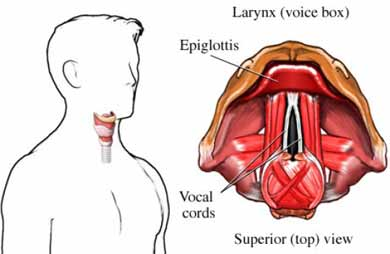 larynx voice box cancer